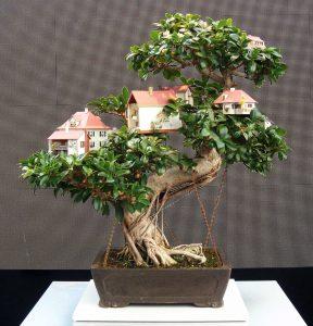 mockup casetta in miniatura su albero bonsai evento pirelli
